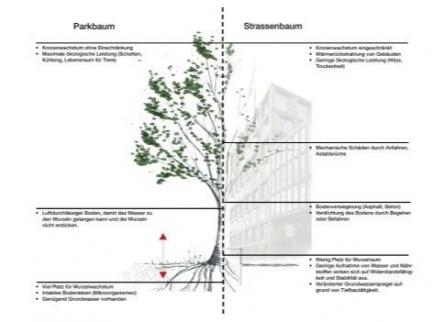 Stadtbaum im Vergleich